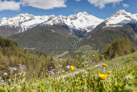 alpine meadows and snow capped mountains