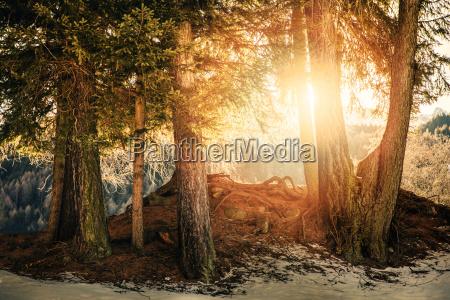 sun rays shining through tree branches