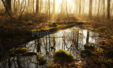 usa pennsylvania poconos scenic view of