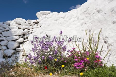 greece cyclades islands mykonos flowers by