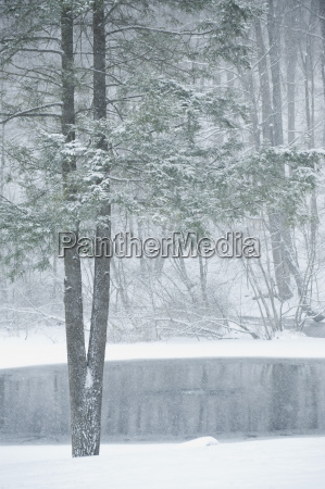 forest and pond in winter