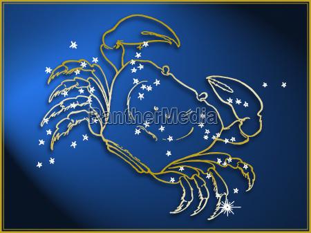 tier nacht nachtzeit tiere fisch fantasie