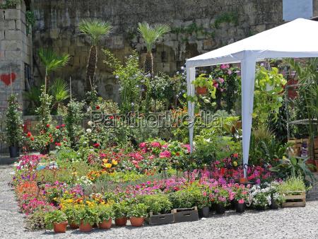 plants nursery