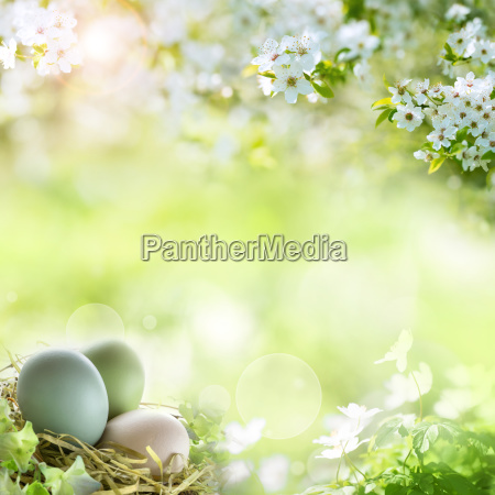 easter eggs with spring blossoms