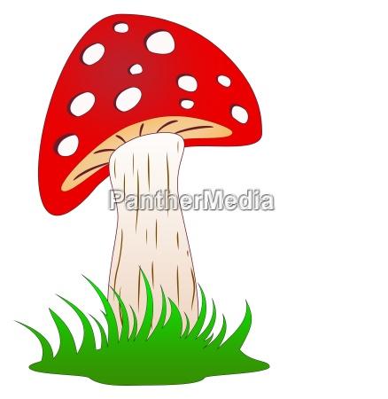 pilz oder fliegenpilz im gruenen gras