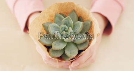 woman hand holding potted green succulents