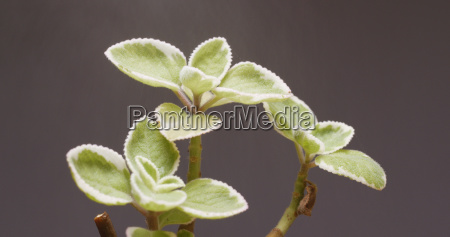 water spray on green plant