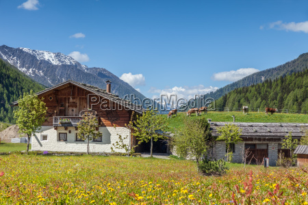 old farmhouse and summer meadow in