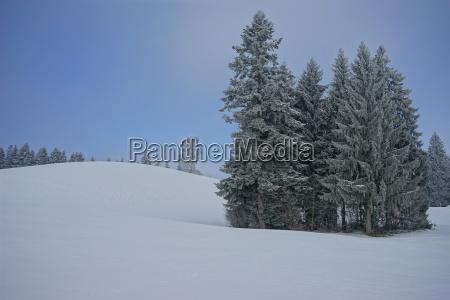 frost am pfaender bei bregenz