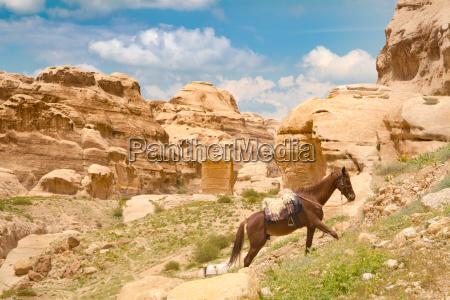 horse in petra jordan