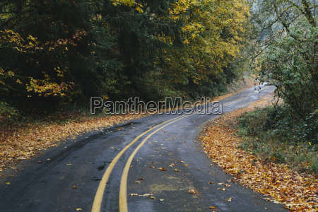 curving road through a forest in