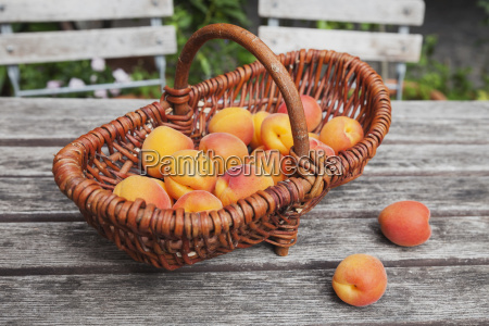 wickerbasket of apricots on garden table