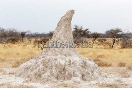 termitenhuegel in afrika