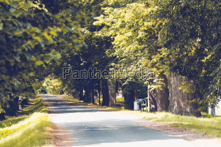 beautiful asphalt road and tree alley