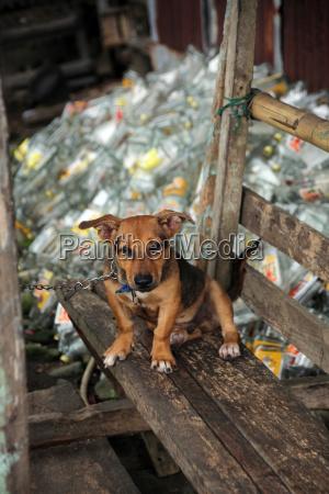 angeketteter hund vor einem berg leerer