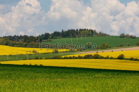 beautiful rape field spring rural landscape