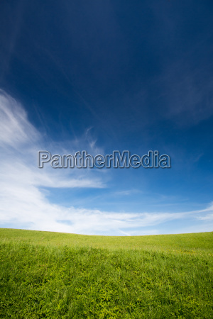 lovely summer field with blue sky