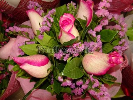 rosen rose rosa