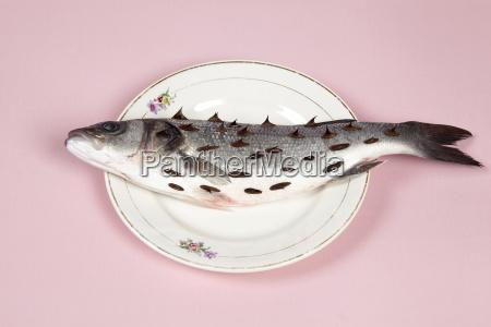 zitronenfischrosa platte rosenstrauch dornen