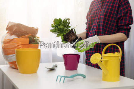 woman planting flower in pot at