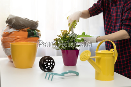 woman planting houseplant in pot at
