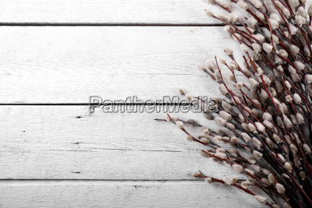 pussy willow branches on white wooden