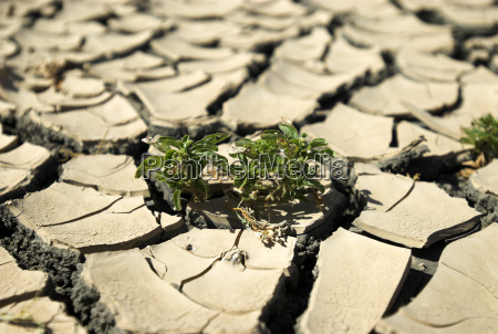 plant in parched earth in the