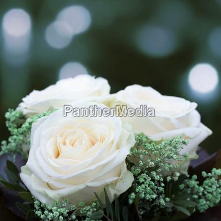 white roses for wedding