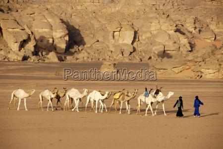 tuareg gehen mit kamelen duch die