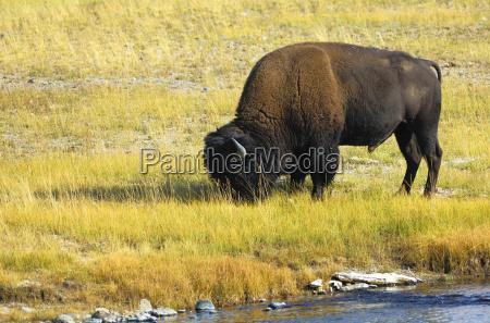 waters american animal mammal national park