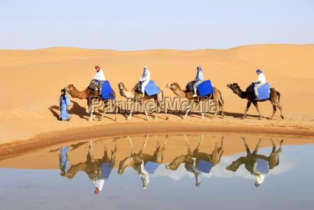 vier kamele mit reitern spiegen sich