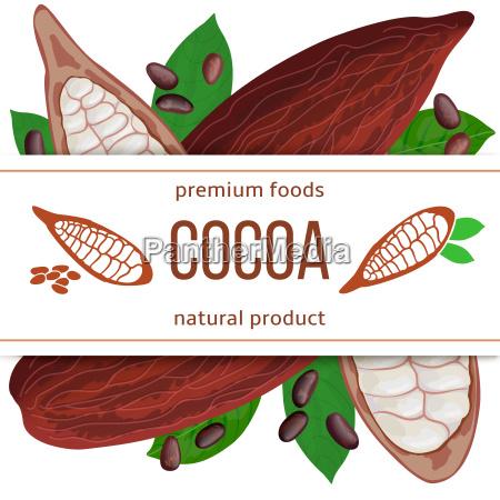 ripe cocoa pod fruit beans and