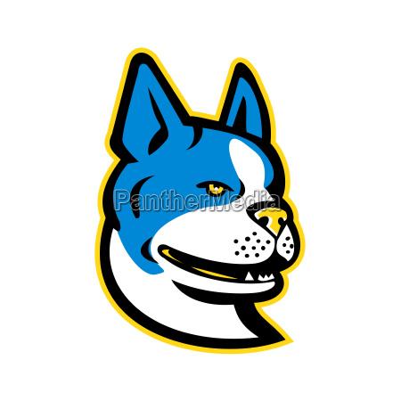 boston terrier dog mascot
