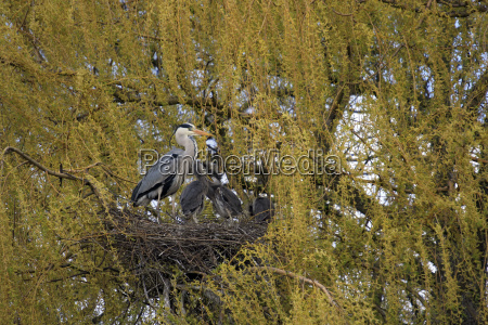 tree trees animal bird fauna animals