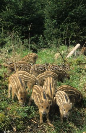 animal mammal fauna animals mammals wildlife