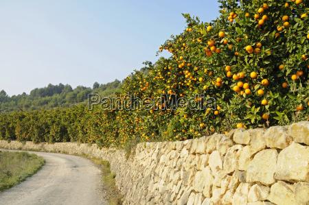 strasse steinmauer plantage