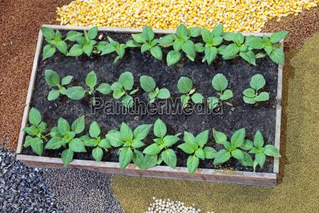 nursery agriculture