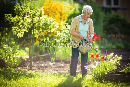 ältere, frau, die, etwas, arbeitet, in, ihrem - 24494988