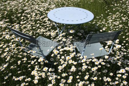 furniture garden flower plant bloom blossom