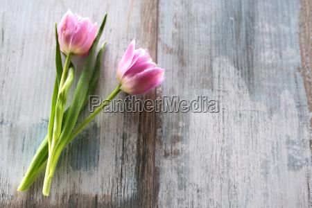 tulips on gray vintage planks