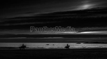 pferd ross sonnenuntergang strand abendrot reitsport
