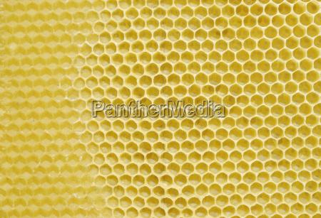 von bienen frisch angefertigte wachswaben auf