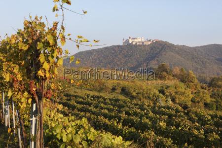 vineyards in front of stift gottweig