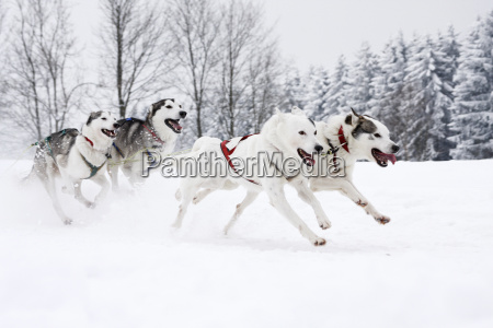 winter animal mammal fauna animals european