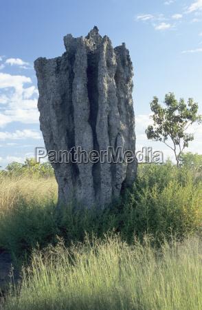 termitenbau australien ozeanien