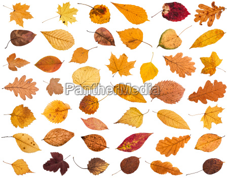 collage from various dried autumn fallen