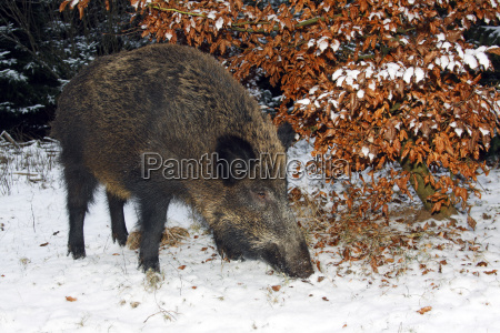 food aliment sweetly female winter animal