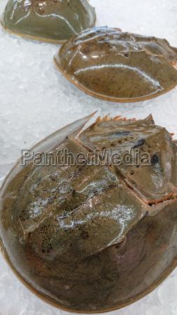 strand wildlife krabbe hufeisen marine sandig