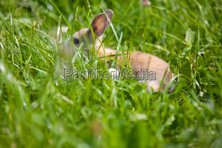 kleines kaninchen