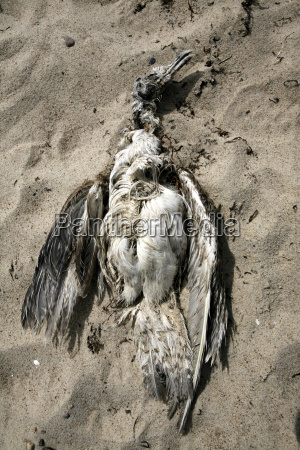 tote mowe am strand kadaver
